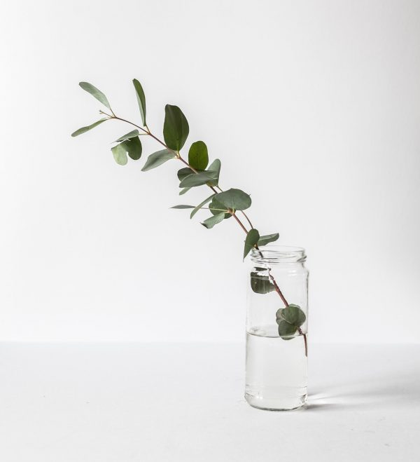 Olive leaf in glass of water